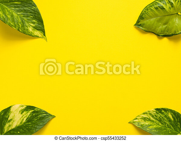 Frame of fresh green leaves on a yellow background. Copy space - csp55433252