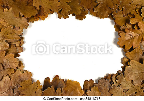 frame of leaves on a white background - csp54816715