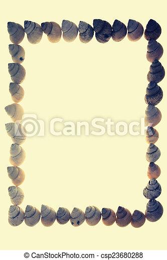 Frame of Moon Snail Shells - csp23680288