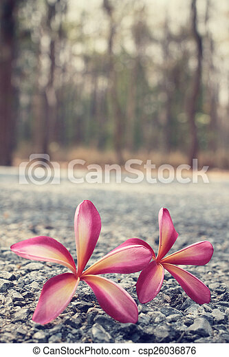 Frangipani flower with forest - csp26036876
