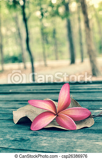 Frangipani flower with forest - csp26386976