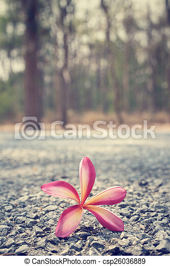 Frangipani flower with forest - csp26036889