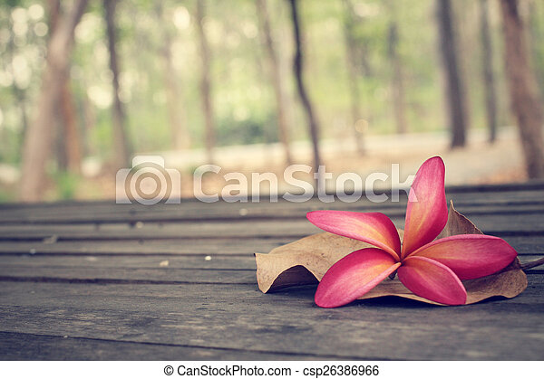 Frangipani flower with forest - csp26386966