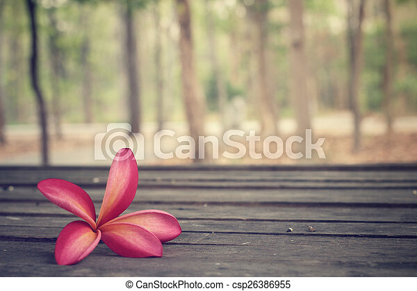 Frangipani flower with forest - csp26386955