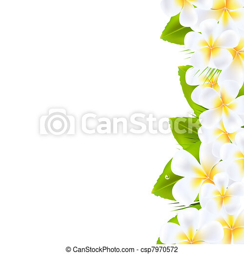 Frangipani Flowers Border - csp7970572