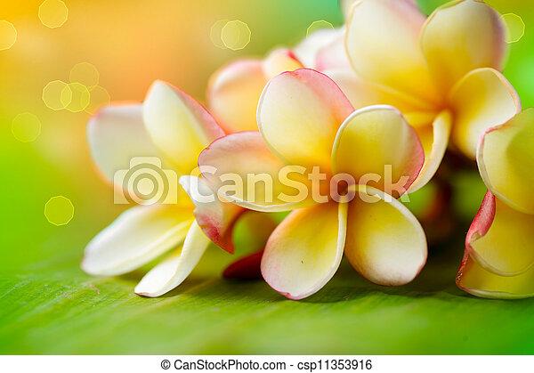 Frangipani Tropical Spa Flower. Plumeria. Shallow DOF - csp11353916