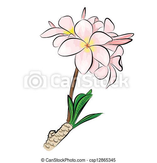 Fleurs de frangipanier dessin - Fleur de tiare dessin ...