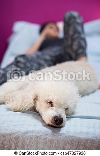Frau Hund Bett Legen
