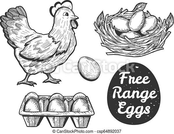 free range eggs set - csp64892037