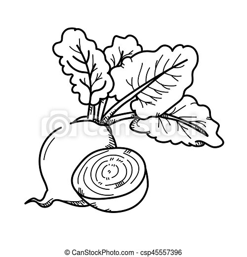Freehand Drawing Illustration Beetroot