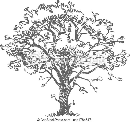 Freehand drawing tree - csp17846471