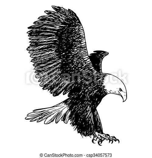 freehand sketch illustration of eagle, hawk bird - csp34057573
