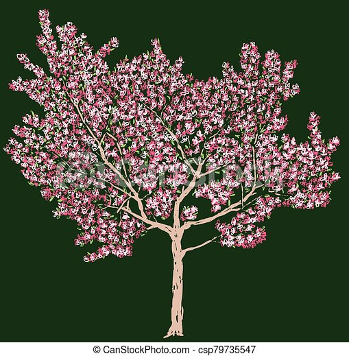 Freehand vector drawing of blooming cherry tree - csp79735547