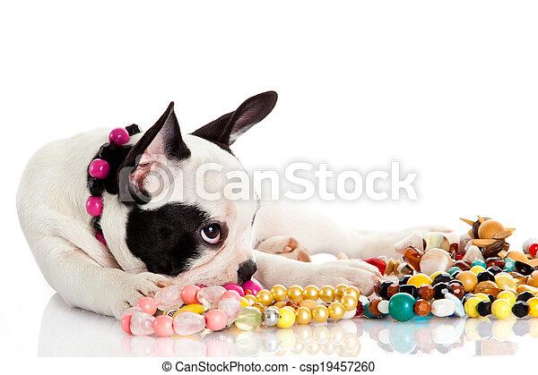 French bulldog - csp19457260