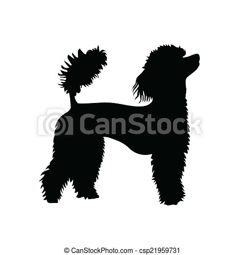 poodle clipart and stock illustrations 2 420 poodle vector eps rh canstockphoto com free french poodle clip art french poodle dog clipart