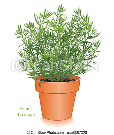 French Tarragon Herb in Flowerpot - csp8867320