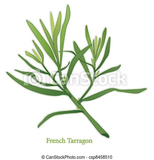 French Tarragon Herb - csp8458510