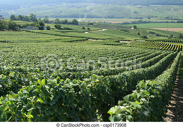 French Vineyard - csp0173908