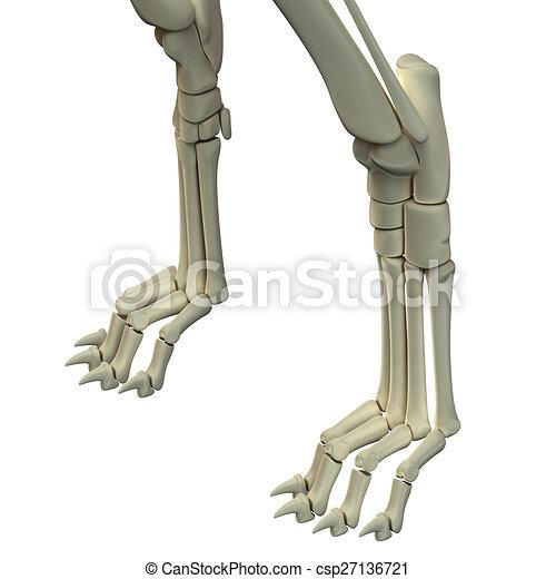 Frente, anatomía, huesos, piernas, perro clip art - Buscar imágenes ...