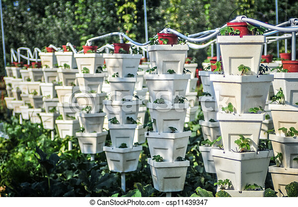 Jardín vertical de fresas - csp11439347