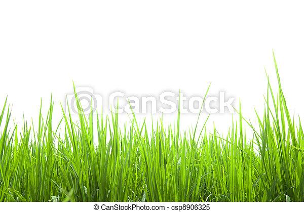 Hierba verde fresca aislada en blanco - csp8906325