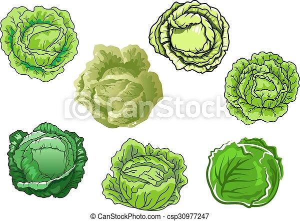 fresco, cavolo, verdure verdi, isolato - csp30977247
