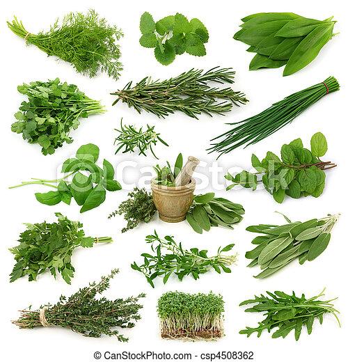 Una colección de hierbas frescas - csp4508362