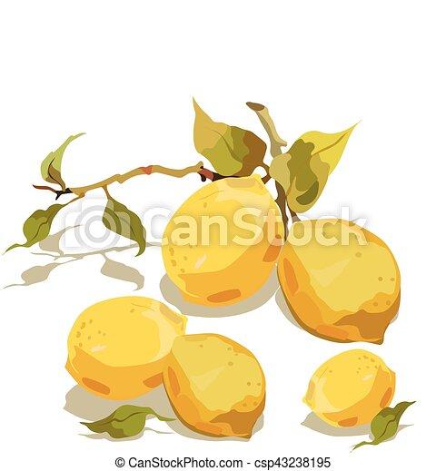 fresco, foglie, limone, ramo - csp43238195