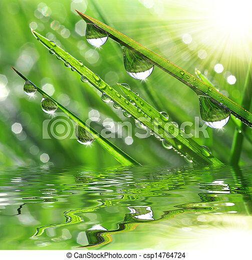 Hierba fresca con gotas de rocío - csp14764724