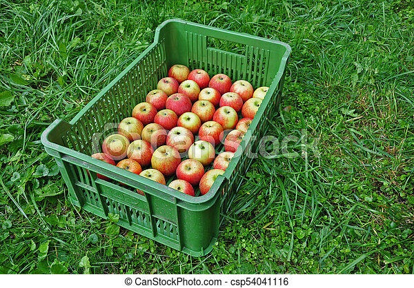 Fresh apples in a crate - csp54041116