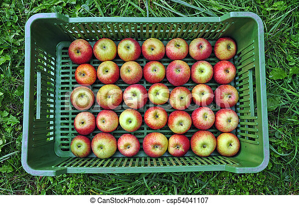 Fresh apples in a crate - csp54041107