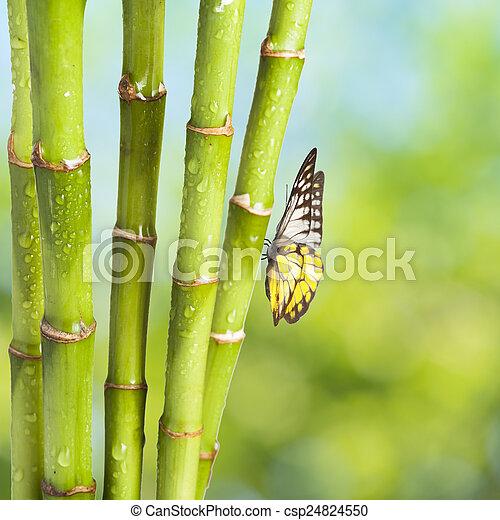 Fresh Bamboo - csp24824550