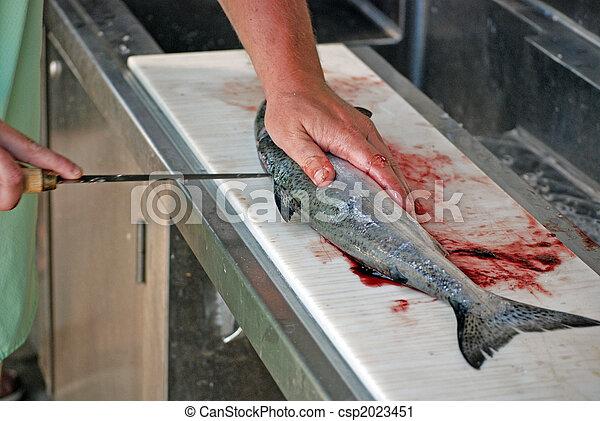 Fresh Catch - csp2023451