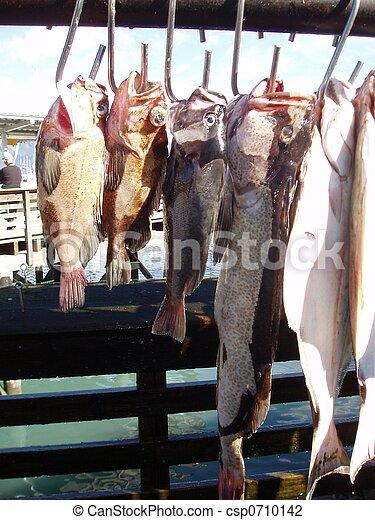 Fresh Catch - csp0710142
