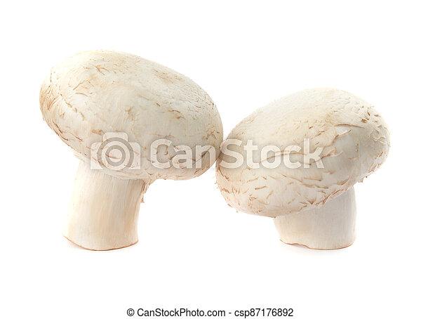 Fresh champignon mushrooms isolated on white background. Organic champignon close up. Side view - csp87176892