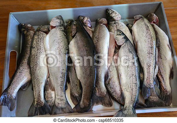 Fresh cleaned trout lay on the table - csp68510335