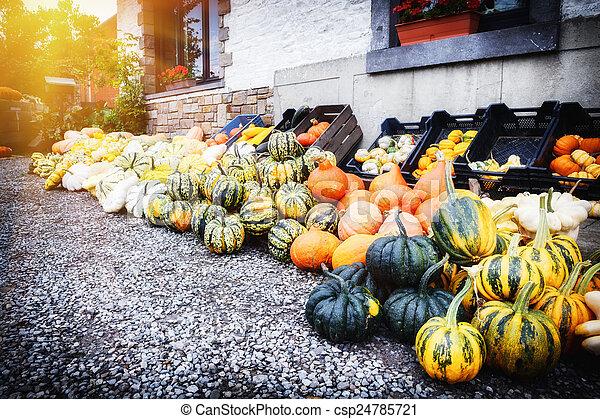 Fresh colorful pumpkins for sale - csp24785721