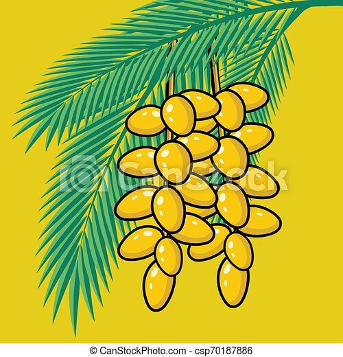 Date Fruit. Dry Date Fruit Isolated. Vector Illustration. Royalty Free  Cliparts, Vectors, And Stock Illustration. Image 60482541.