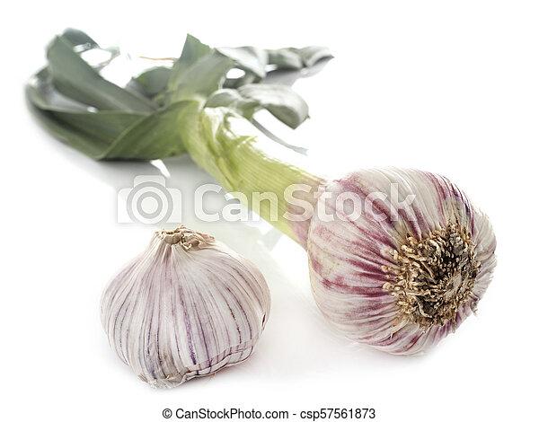 fresh garlic in studio - csp57561873