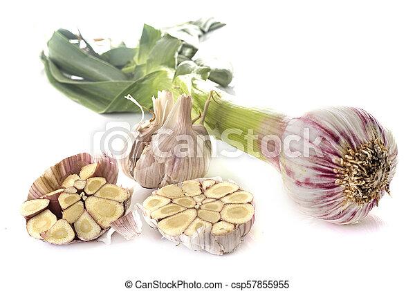 fresh garlic in studio - csp57855955