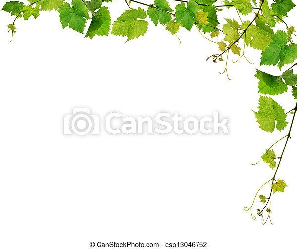 Fresh grapevine border - csp13046752