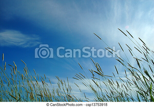 fresh grass in sun light and sky on background - csp13753918