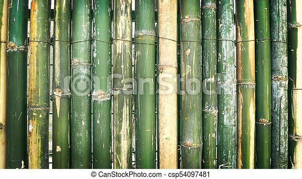 Fresh Green Bamboo Wall Background