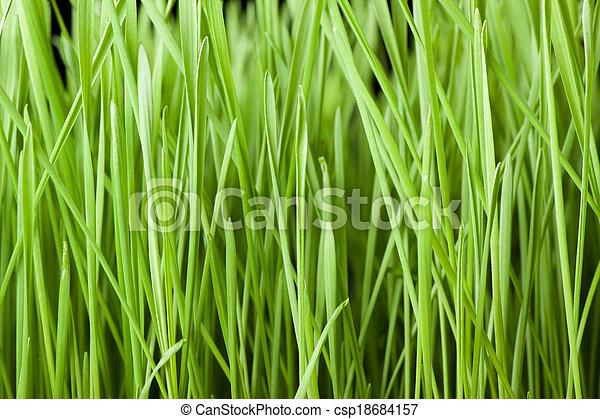 Fresh green grass background - csp18684157