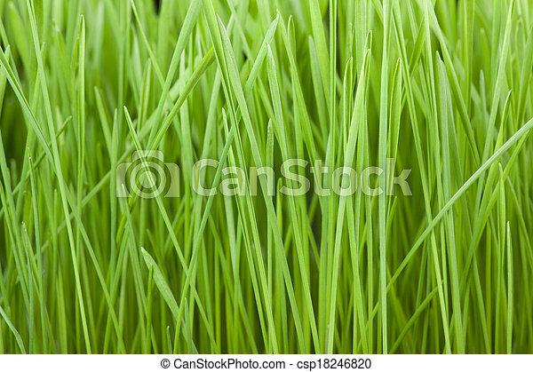 Fresh green grass background - csp18246820