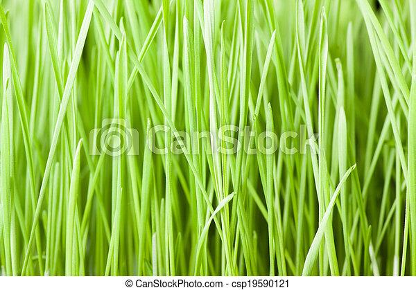 Fresh green grass background - csp19590121