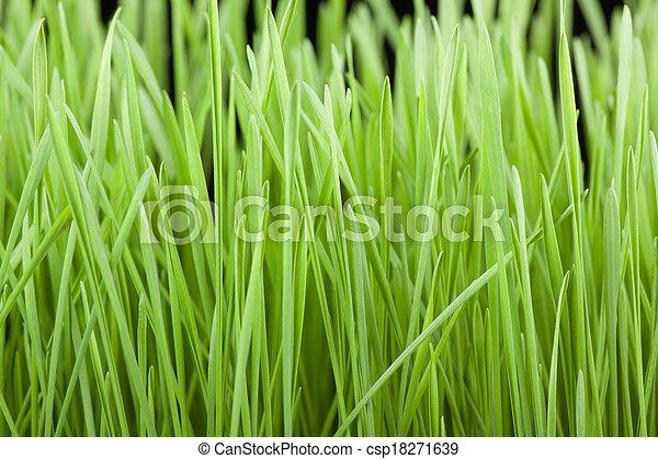 Fresh green grass background - csp18271639