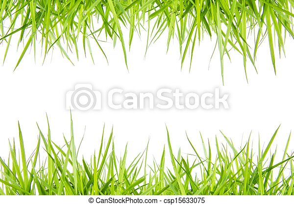 fresh green grass isolated on white - csp15633075