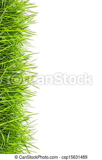 fresh green grass isolated on white - csp15631489