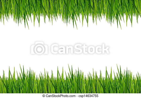 Fresh green grass isolated on white - csp14634755